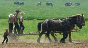 amish_plowing